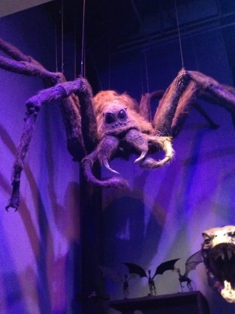 Aragog in the creature department on the Warner Bros Making of Harry Potter Studio Tour