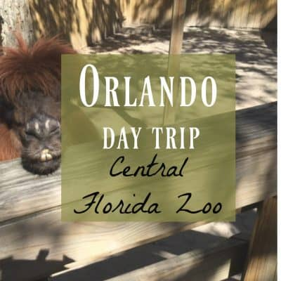 Orlando Day Trip and a Frugal Animal Adventure